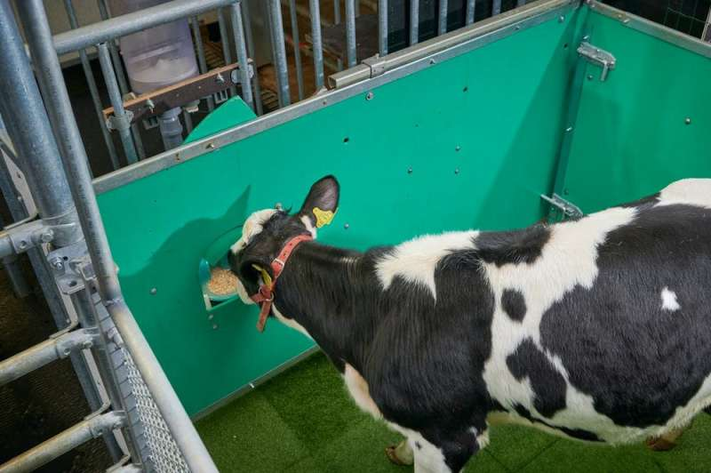 Toilet training cows could help combat climate change