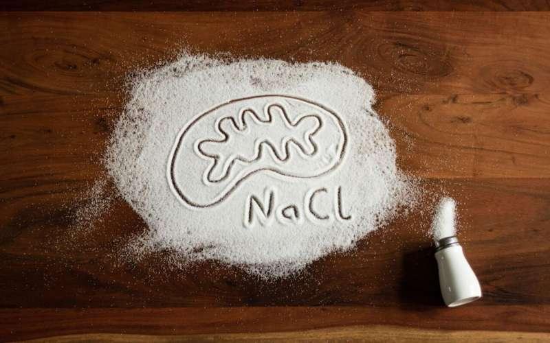 Too much salt suppresses phagocytes