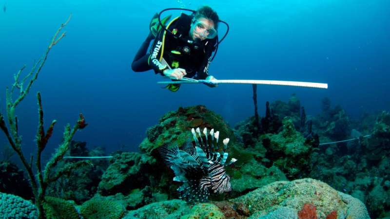 Tool predicts which native fish species are most at risk from lionfish predators
