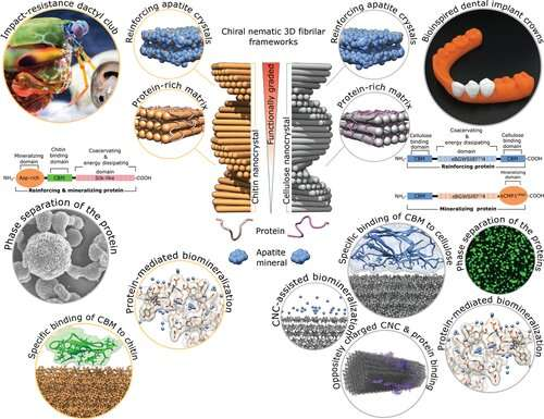 Tougher and lighter dental implant crowns can be made of cellulose-based nanocomposites