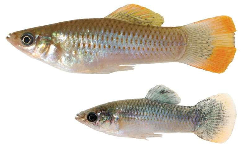Toxin-adapted fish pass down epigenetic mutations to freshwater offspring
