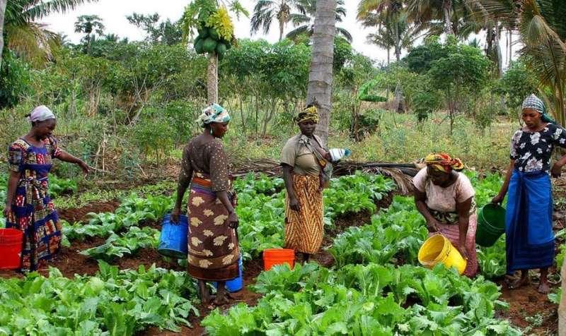 El seguimiento de la historia de la agricultura en África da pistas sobre la baja producción