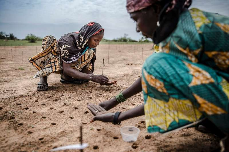 Tree planting projects - like this one to reforest the Sahel - are among ideas put forward to reduce CO2