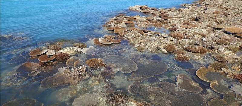 Tropical coral species at extreme risk from climate change