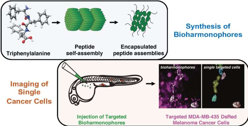 Tumors illuminated brightly and precisely with new biodegradable nanoprobe