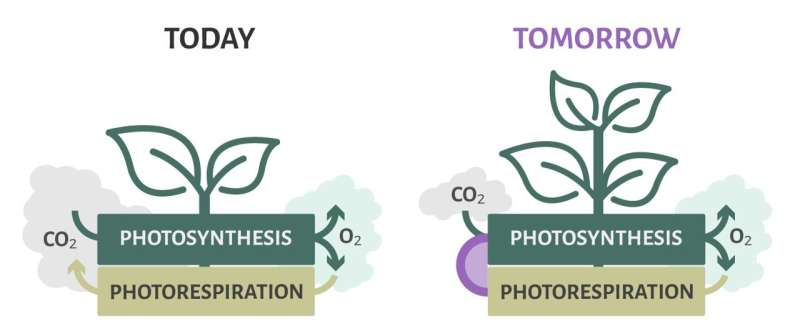 Turn problems into opportunities: Photorespiration for improved plant metabolism