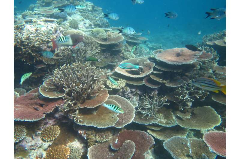 Turning the tables -- how table corals are regenerating reefs
