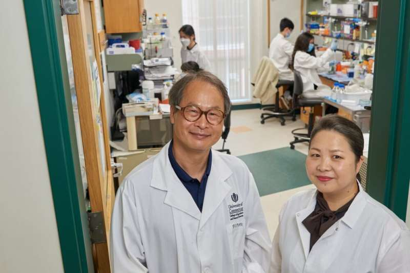 UConn researchers find health benefits of connecticut-grown sugar kelp