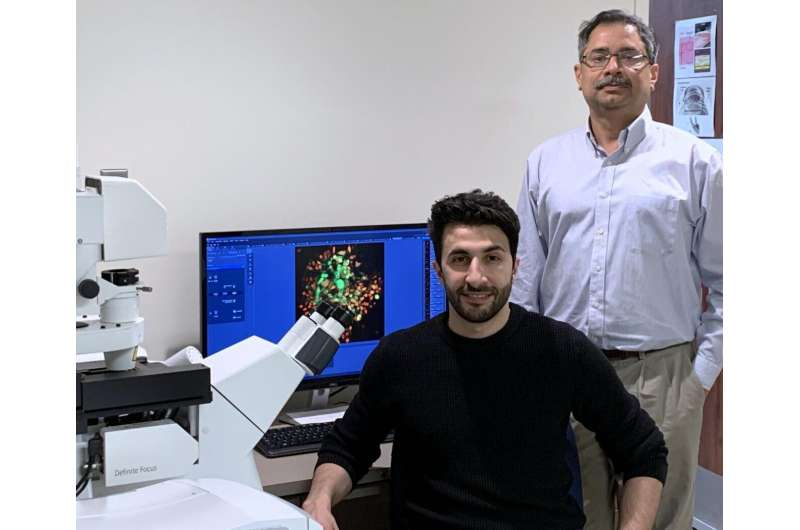 UIC researchers discover hidden link between cellular defense systems