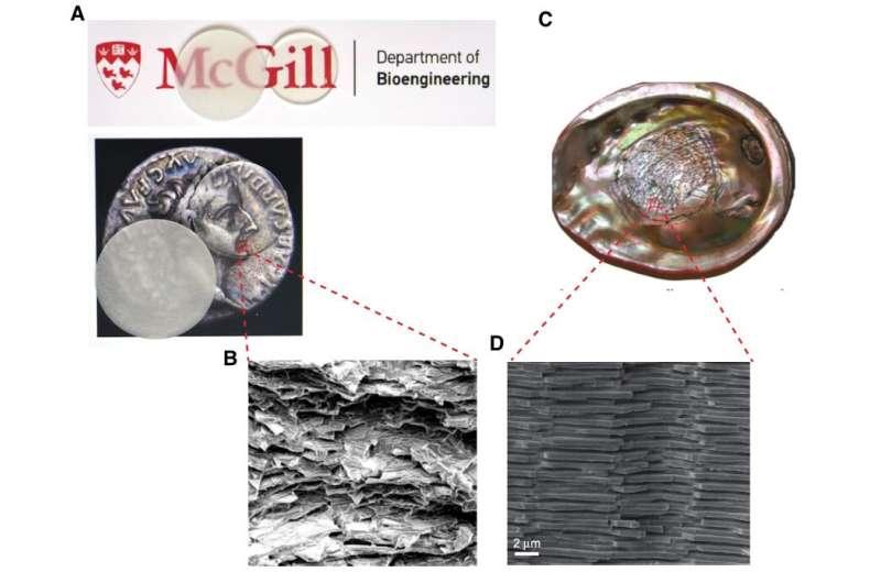Unbreakable glass inspired by seashells