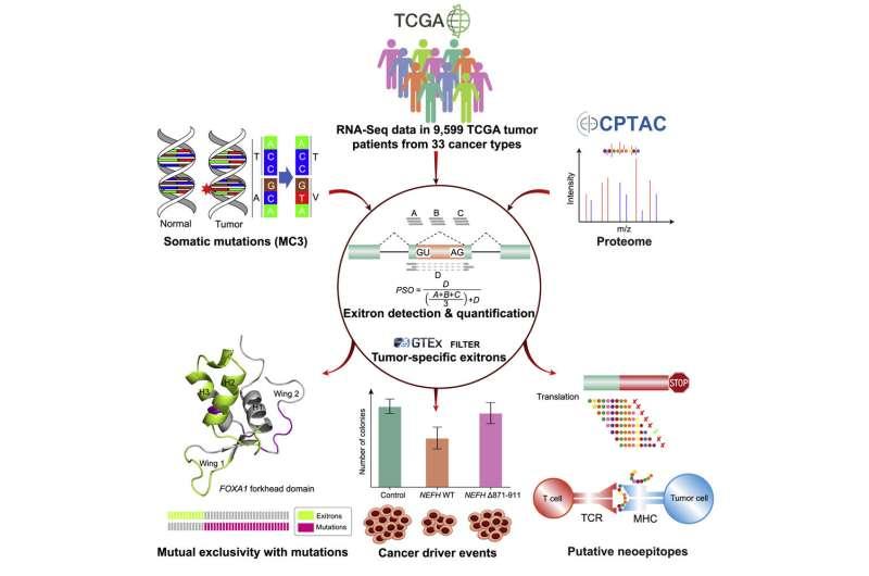Uncovering epigenetic mechanisms underlying cancer development