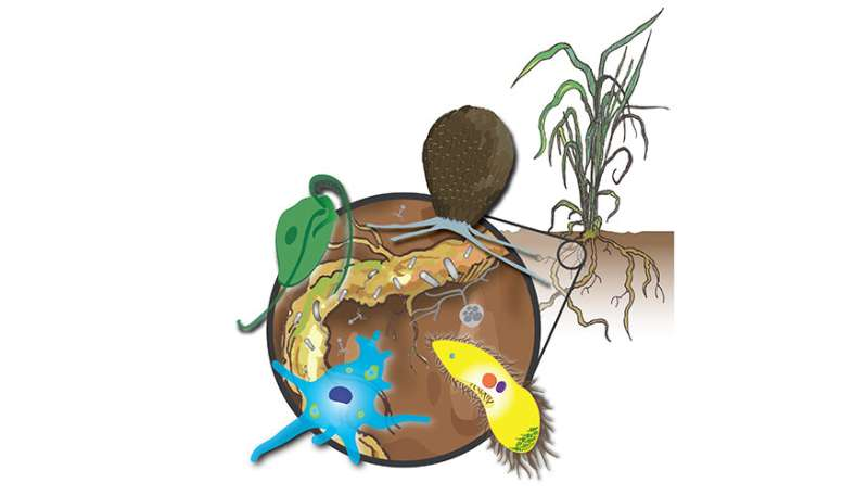 Underneath it all: dishing the dirt on protists