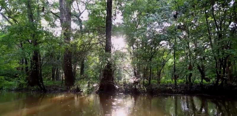 Underwater ancient cypress forest offers clues to the past