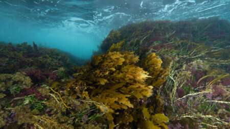 Underwater Understory: The southwest forest you've never heard of