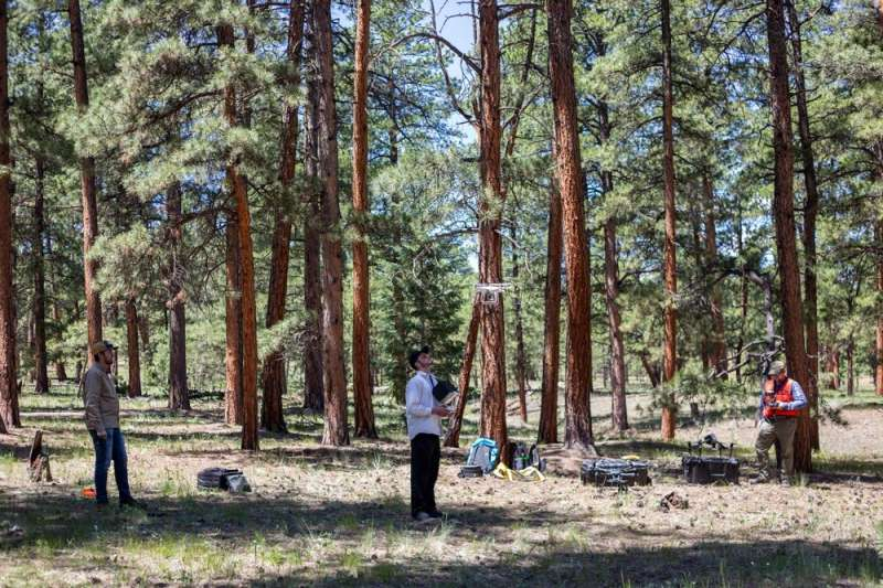 Unmanned aerial systems for forest management