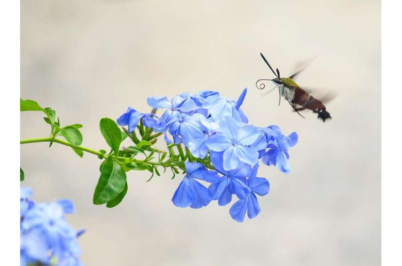 Unsure how to help reverse insect declines? Scientists suggest simple ways