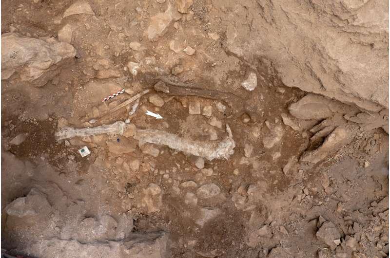 Upper Paleolithic human remains found at the Cova Gran de Santa Linya site