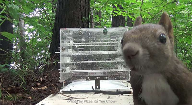 Urban squirrels, how much are we disturbing you?