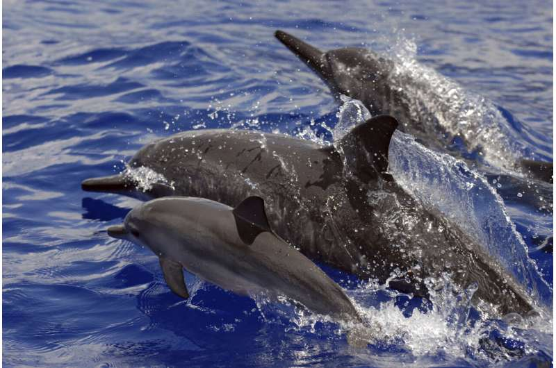 The United States bans swimming with Hawaii's nocturnal spinner dolphins