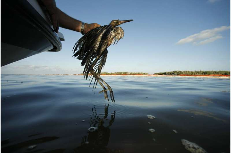 US proposes ending rule that weakened wild bird protections