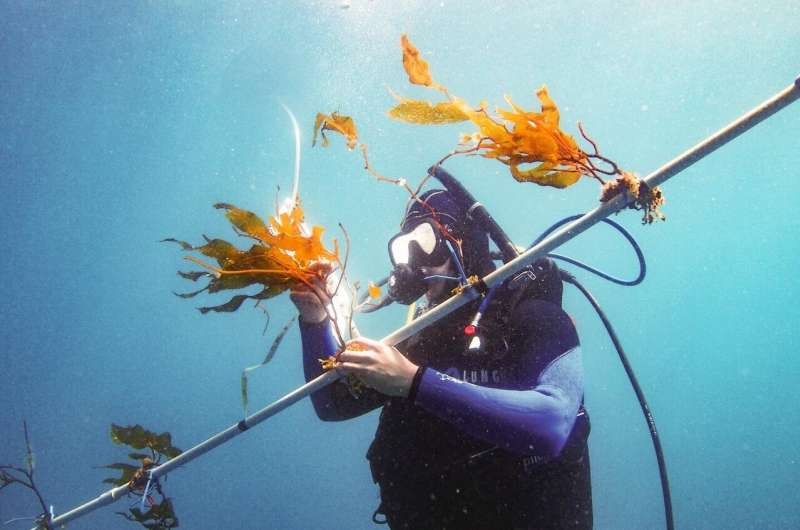 USC study shows promising potential for marine biofuel