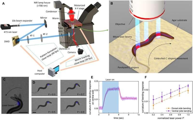 Using optogenetics to control movement of a nematode