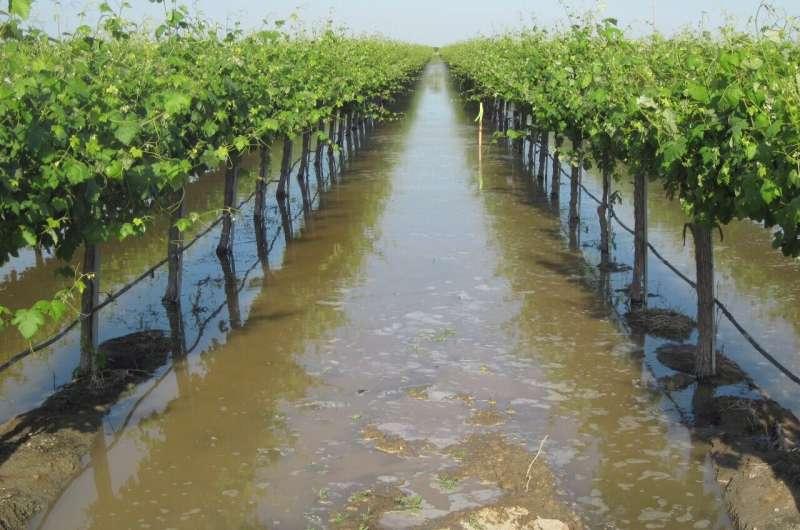 Uso de las inundaciones para hacer frente a las sequías