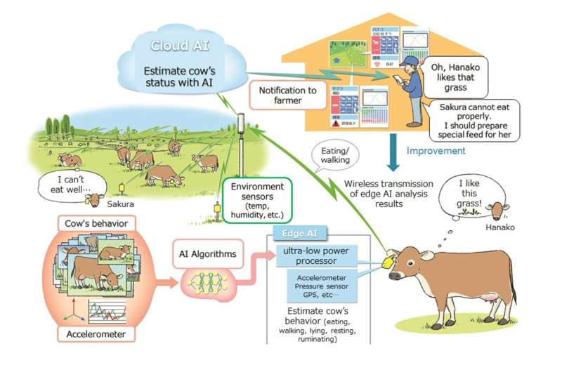 """Validation of asset based lending by grazing cattle using AI monitoring system """"PETER"""" started"""