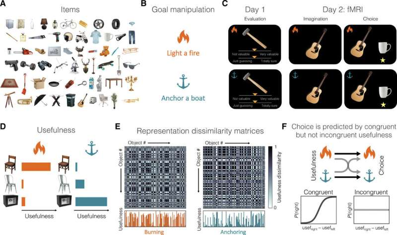 Value and neural representations during goal-directed behavior