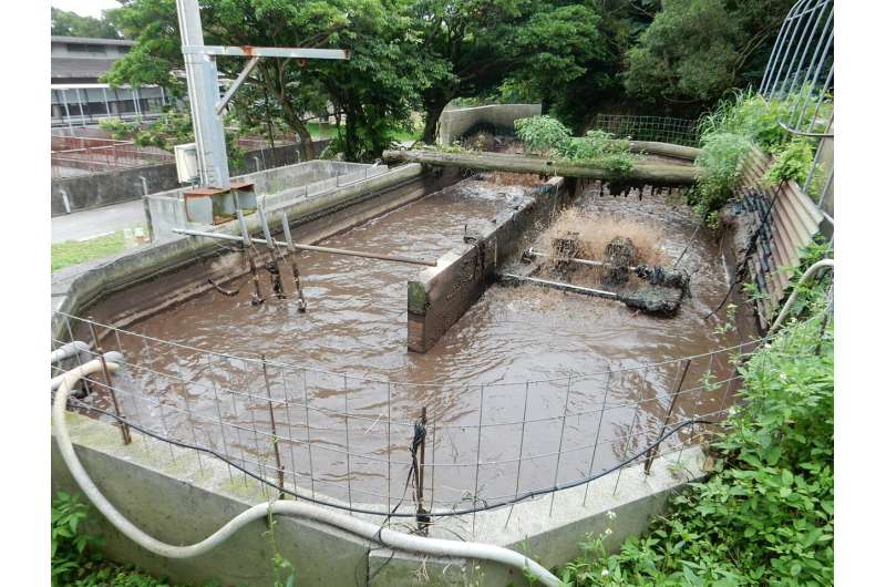 ¿Valor de las aguas residuales?  La nueva tecnología hace que la cría de cerdos sea más respetuosa con el medio ambiente