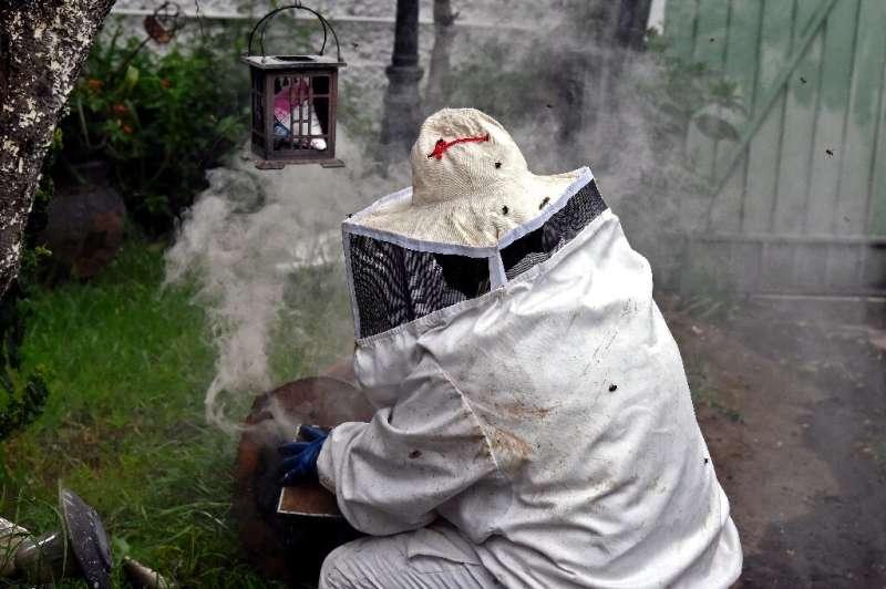 La veterinaria Adriana Veliz trabaja para sacar abejas del jardín de una casa cerca de la capital mexicana
