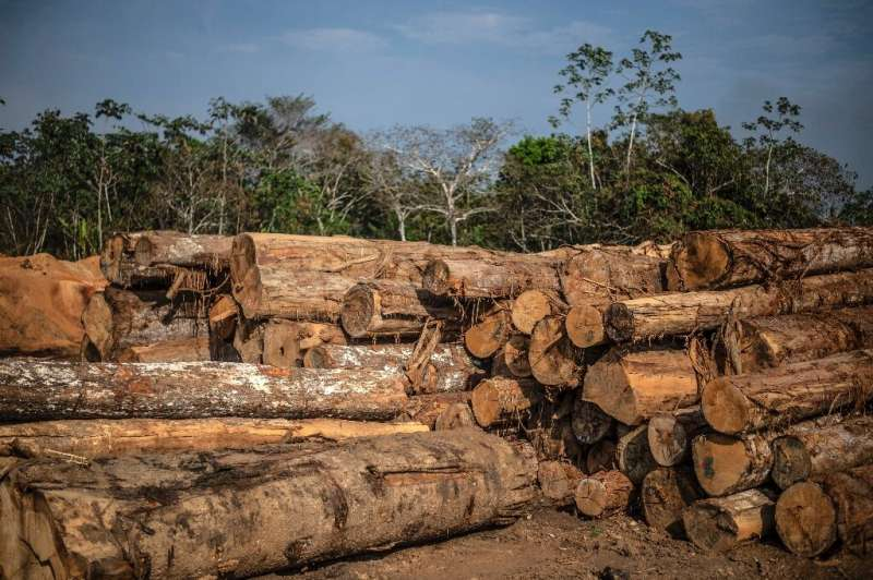 View of logs stacked to be cut at a sawmill near Puerto Maldonado, Tambopata province, Madre de Dios region, in the Amazon rainf