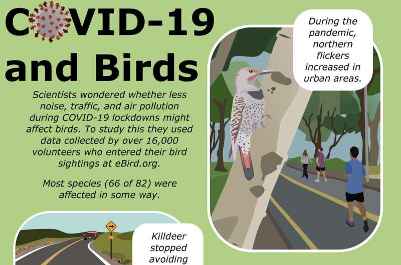 Volunteer observations during pandemic lockdown showed many bird species increasing in abundance in urban areas
