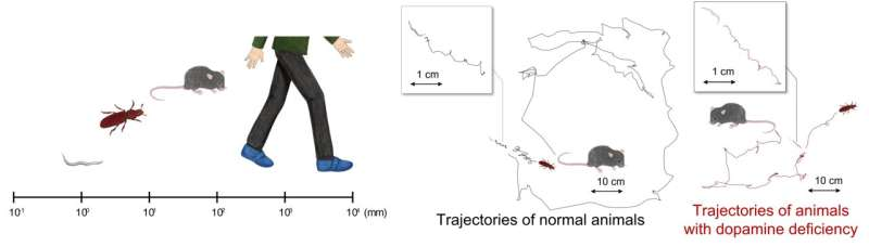 Walking patterns of movement disorders shared among worms, mice, and humans