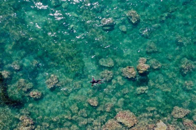 Warming sea temperatures, pollution and dynamite fishing are causing Adriatic marine forests to disappear