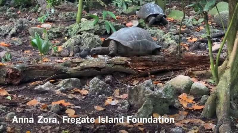 Watch this slow but deadly tortoise hunt a baby bird