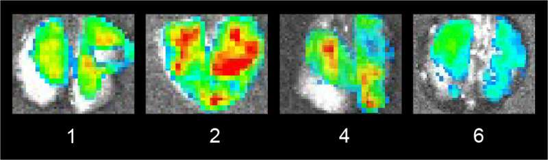 Watching SARS-CoV-2 spread in animal models in real time