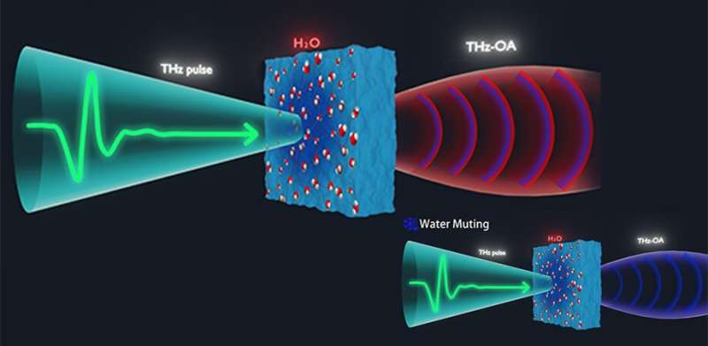 Water muting with THz optoacoustics: A breakthrough for biomedical applications
