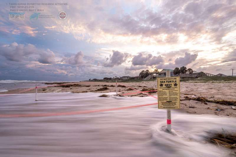 Wave wash-over poses threat to endangered sea turtle nests and hatchlings