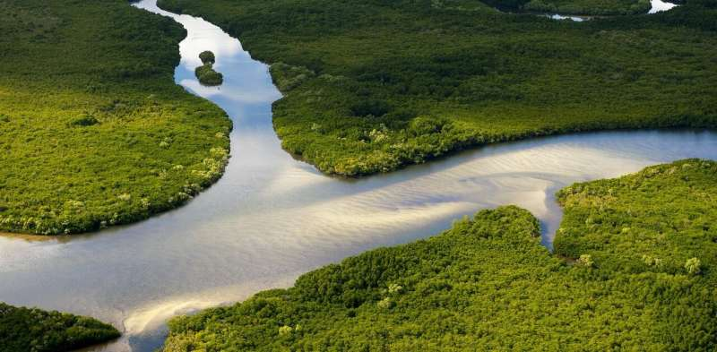 Wetlands have saved Australia $27 billion in storm damage over the past five decades