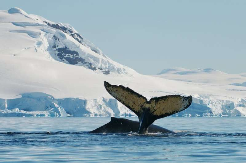Whale and dolphin brains produce lots of heat