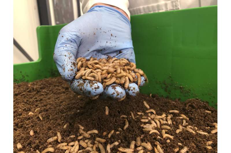 What pairs with beetle? Startups seek to make bugs tasty