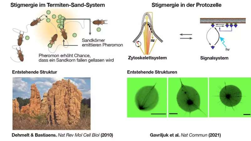 What termites and cells have in common