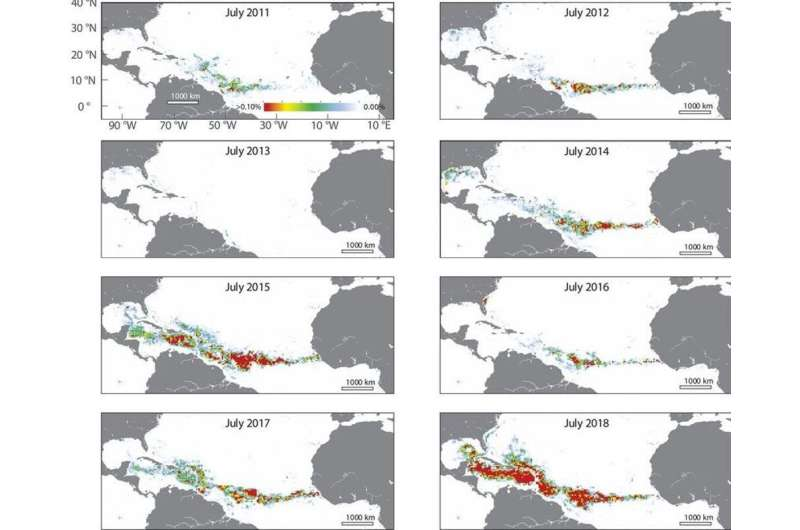 What's driving the huge blooms of brown seaweed piling up on Florida and Caribbeanbeaches?
