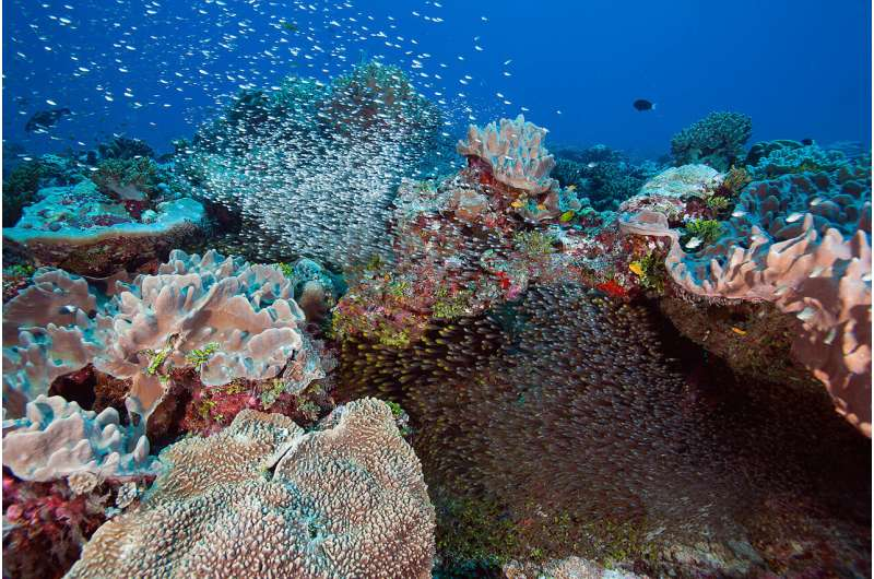 What's happening to the most remote coral reefs on Earth?