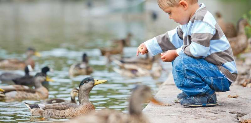 What to feed ducks – according to science
