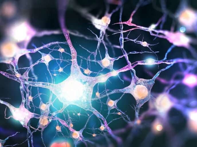 When all your synapses aren't firing: Study opens door to new brain disease treatments