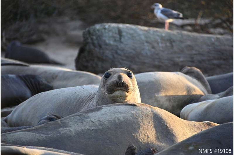 When humans disturb marine mammals, it's hard to know the long-term impact