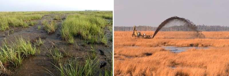 When resistance is futile, new paper advises RAD range of conservation options