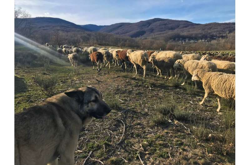 When wolves are at the door – what communities need to get on with new neighbors